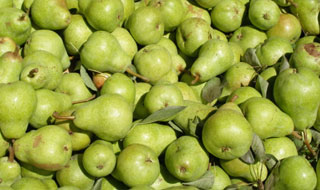 green pears for pies