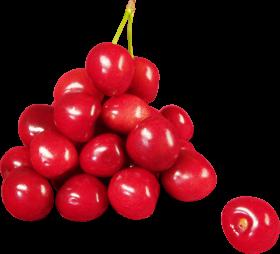 cherry montmorency